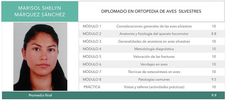 ORTOPEDIA-MARQUEZ-SANCHEZ.png