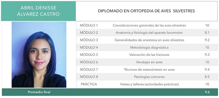 ORTOPEDIA-ALVAREZ CASTRO.png