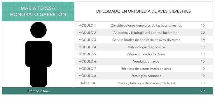ORTOPEDIA-HONORATO-GARRETON.png