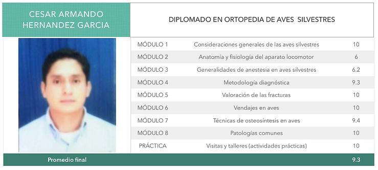ORTOPEDIA-HERNANDEZ-GARCIA.png
