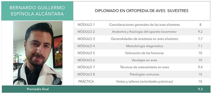 ORTOPEDIA-ESPINOLA-ALCANTARA.png