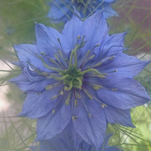 Élixirs floraux Dominique Romiguière