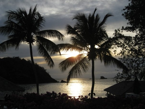 St Lucia Sun through Trees