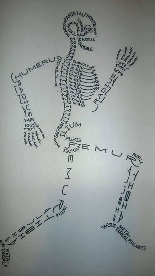 This could work in ANY language. Our foundation, the skeleton.
