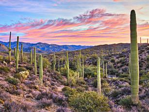 Develop your leaders in Arizona
