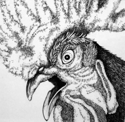 ROOSTER´S EYE