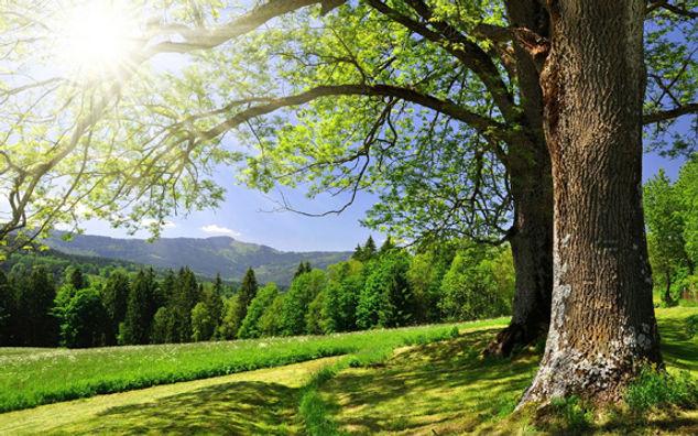 Earth_Tree_Tree_4159.jpg