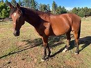 Sam Coopers Horse.jpg