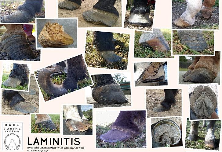 Laminitis pic collage.jpg