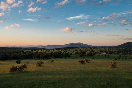 Early Landscape.jpg