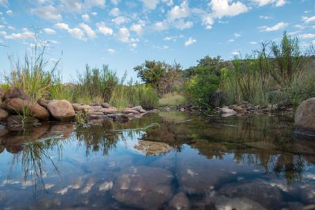 Madera Creek Reflections.jpg