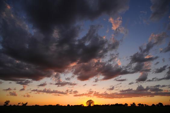sunset tree-0178.jpg