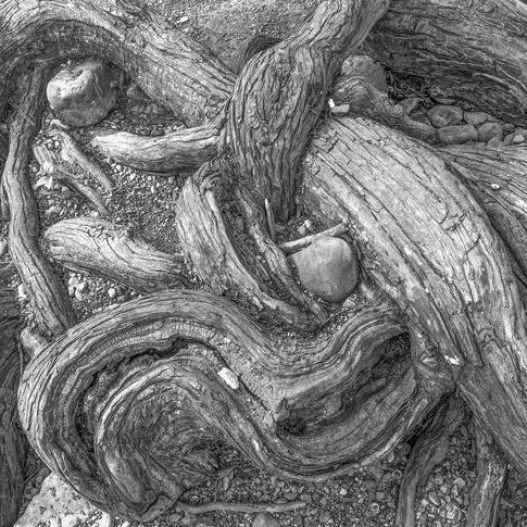Cypress, McKinney Falls State Park