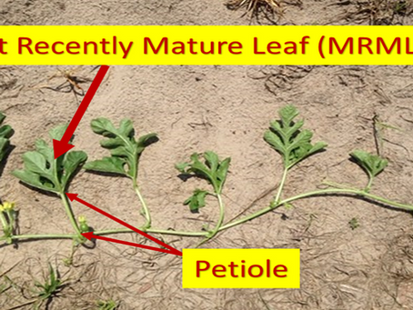 Plant Nutrient Testing Article