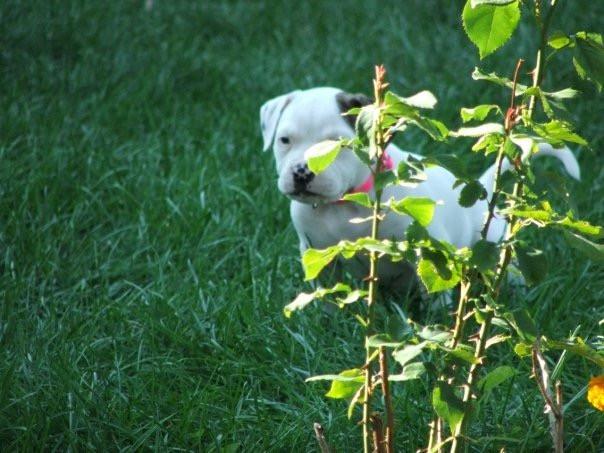 Hiding Puppy