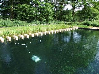 gele lissen in ecologisch zwembad petits-fours- Busserolles