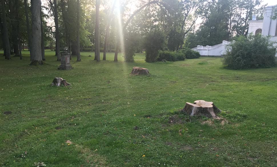 Pärast ohtliku puu langetamist jäi alles puhas plats.