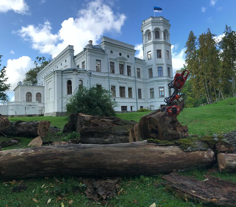 Ohtliku puu langetamine Jõgevamaal Puurmani mõisa pargis.