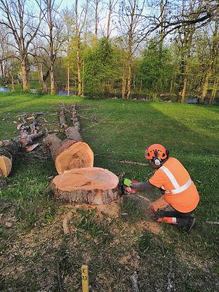 Ohtliku puu langetamine