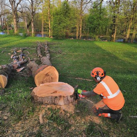 Palju maksab ohtlike puude langetamine?