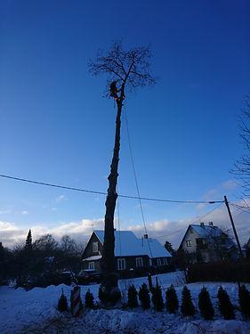 Ohtliku puu langetus ronides.JPG