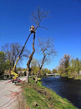 Ohtliku puu langetamine.jpg