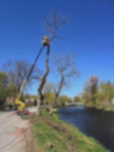 Ohtliku puu langetamine tõstukiga
