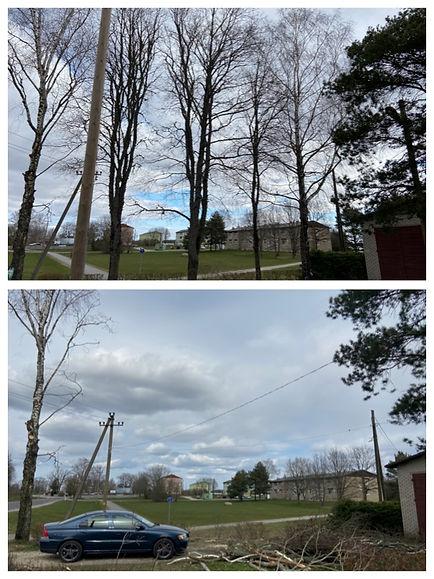 Puude langetamine elektriliinide vahel.j