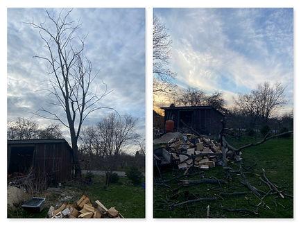 Kuivanud puu langetus.jpg