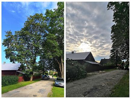 Ohtlik puu - Enne&pärast.jpg