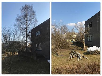 Ohtlik puu maja külje all.jpg