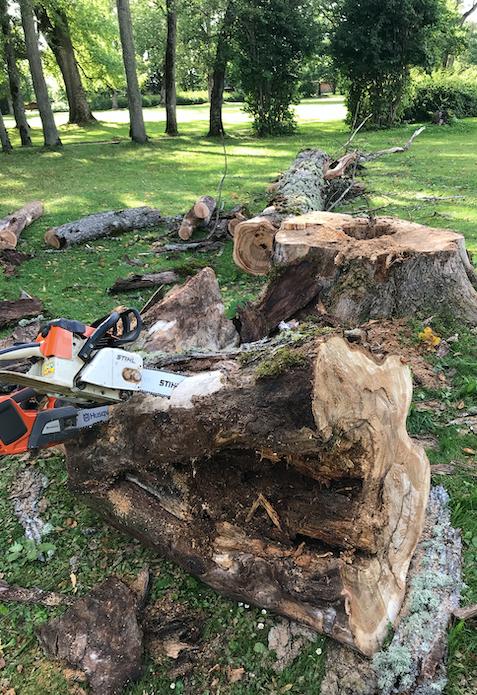 Seest õõnes ohtlikuks muutunud puu tuli eemaldada.