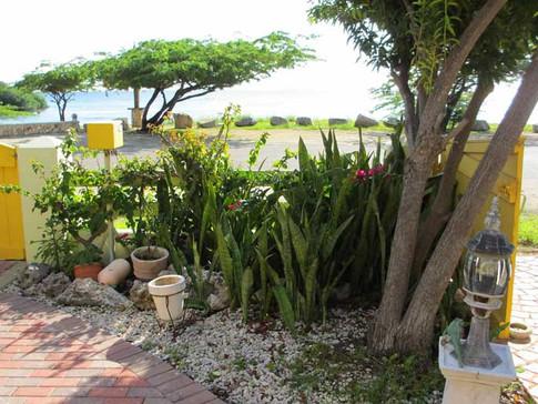 Island greenery.