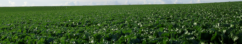 Agriculture_Almeria.png