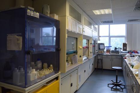 NEIF Lab4.JPG