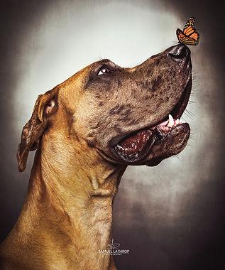 Pet artistic photos