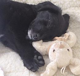 Dog Boarding - Cute pup sleeping