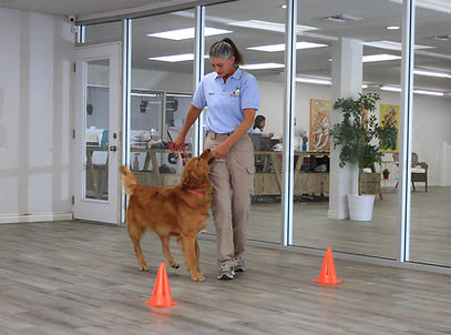 Dog Training at Paw Sweet Paw
