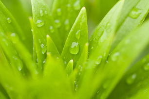 Water Drops On Green Plant Leaf.jpg