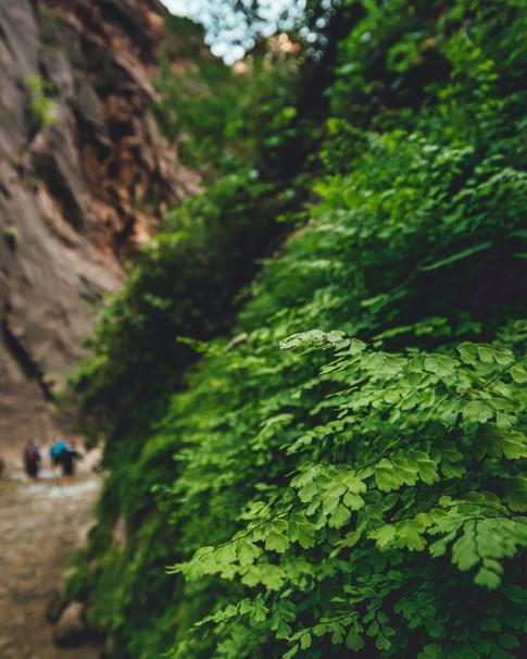 Narrows Ferns