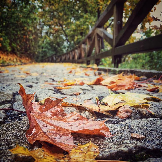 Hope everyone had a great Halloween! #prague #czechrepublic #praguewalks #towerparkprague #fall #aut