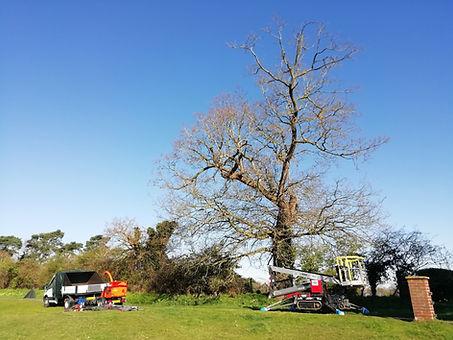 oak pruning edited.jpg