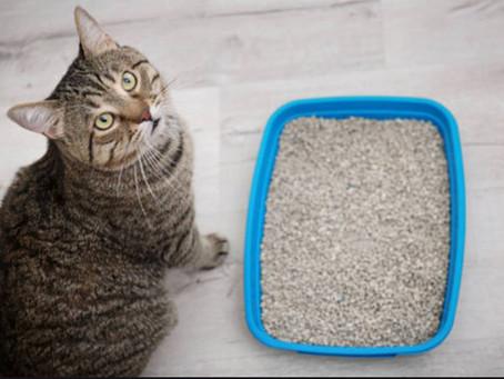 מחקר של מכון ויצמן מגיע גם לחתולים שלנו
