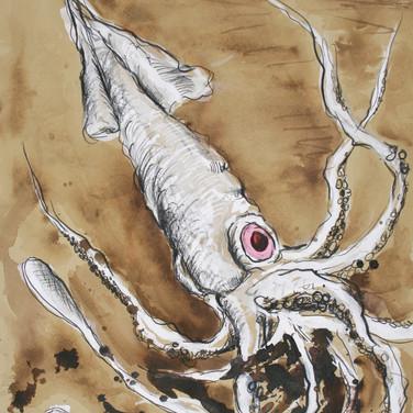 Albino Squid