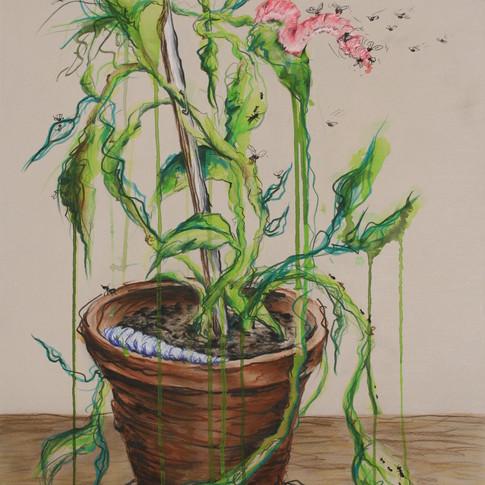 Plant with Slugs