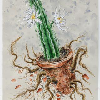 Escape Roots