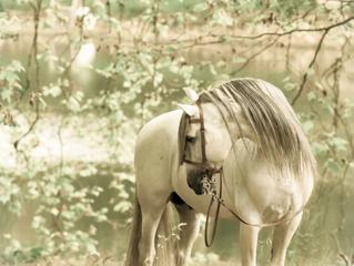 Paarden kalender 2017