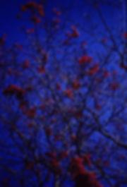 Rouge et bleu 3D.JPG