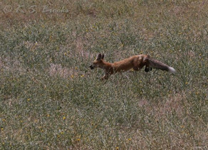 The Quick Brown Fox