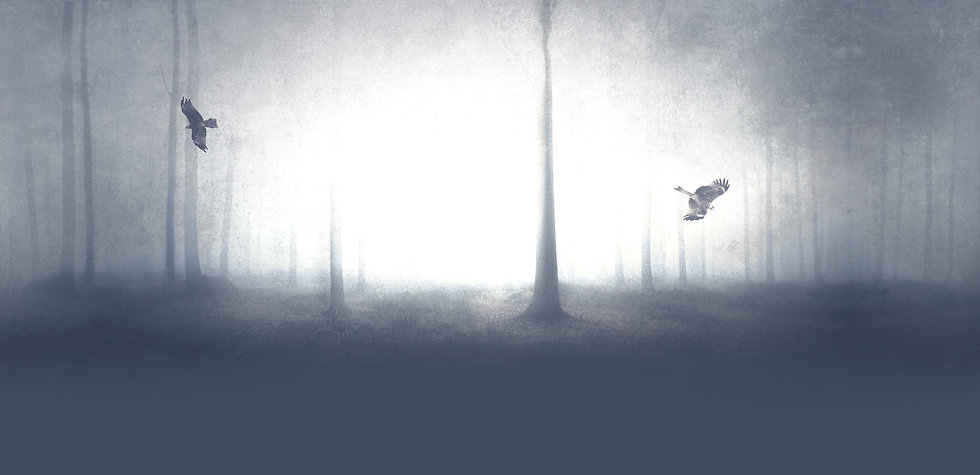Spooky%20Forest_edited.jpg